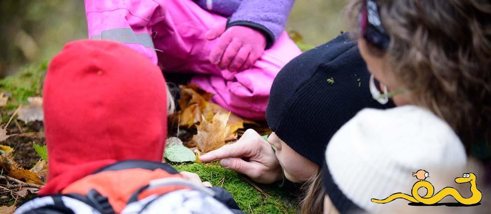 Blir Naturskogsledare. Härlig och lärorik kurs helgen 23 till 24 april i Karlstad. Öppen för alla medlemmar.